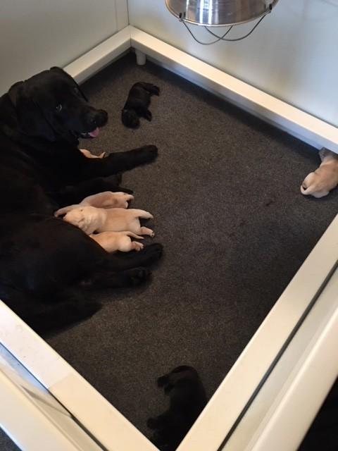 Baby's Puppies 1
