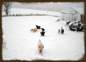 snowykennel